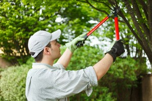 complete yard cleanup pruning