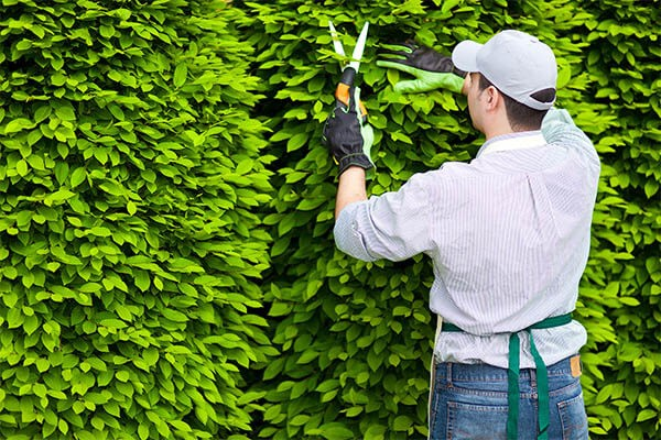 plant shrub bed care and pruning services