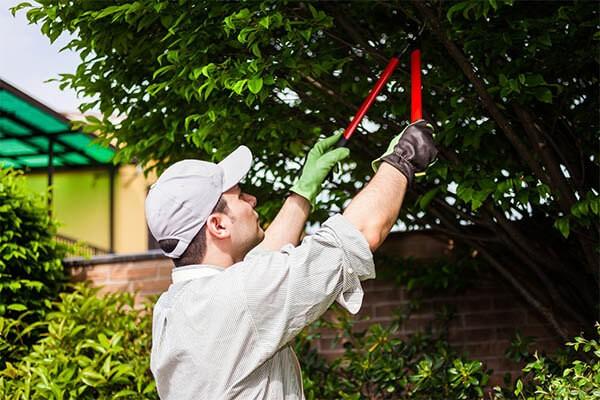 budget yard maintenance tree pruning